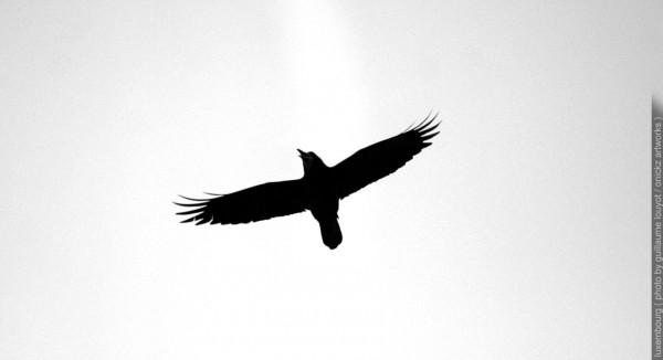 luxembourg bird