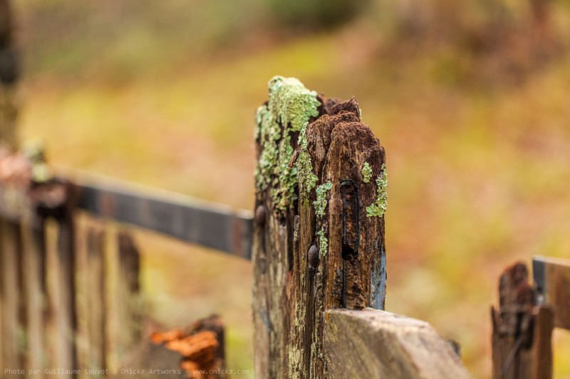 Old Fence
