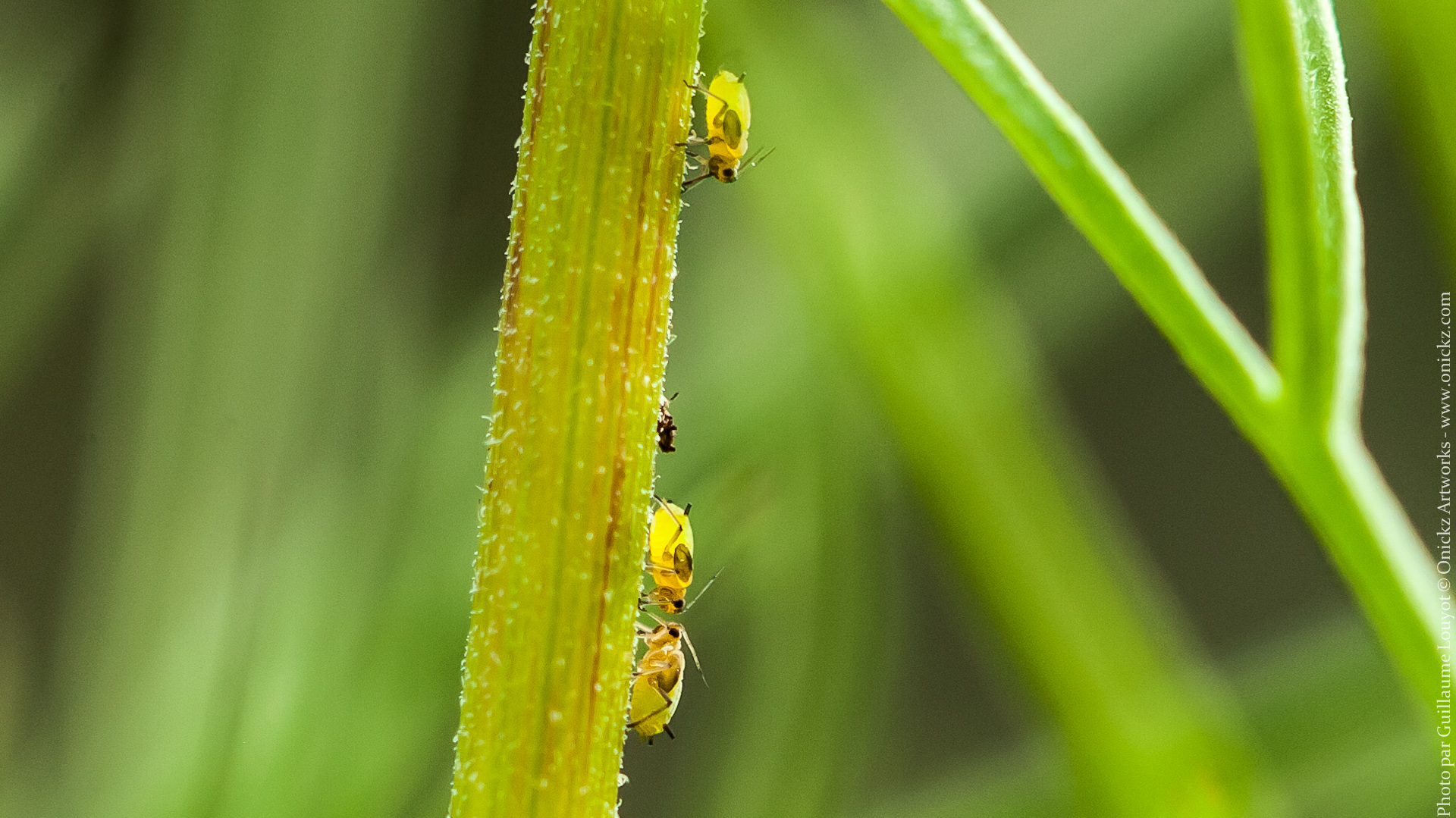 Baby Insects - photographie 30680 par Guillaume Louyot © Onickz Artworks